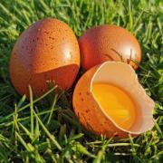 œufs Marans