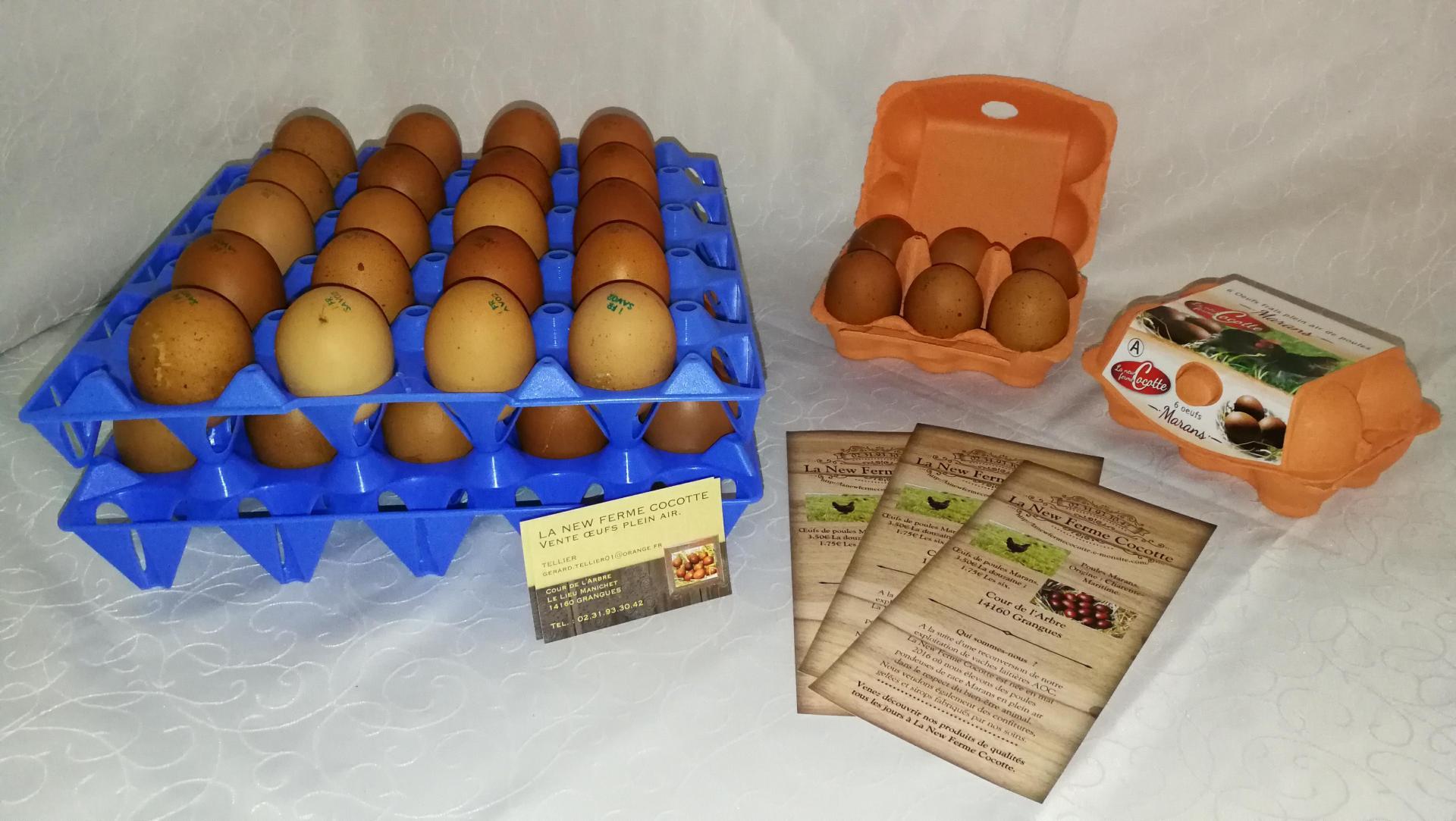 Les œufs de Marans