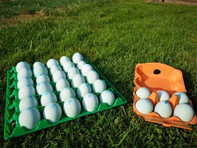 œufs Azur