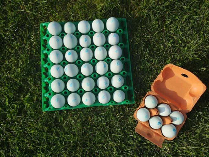Les œufs Azur